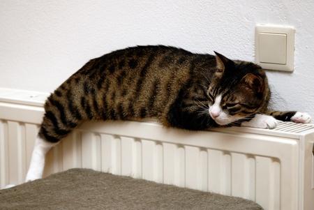 heizung katze warm Komfort Effektivität Bedienfreundlichkeit